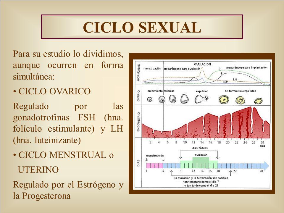 CICLO SEXUAL Para su estudio lo dividimos, aunque ocurren en forma simultánea: CICLO OVARICO Regulado por las gonadotrofinas FSH (hna. folículo estimu