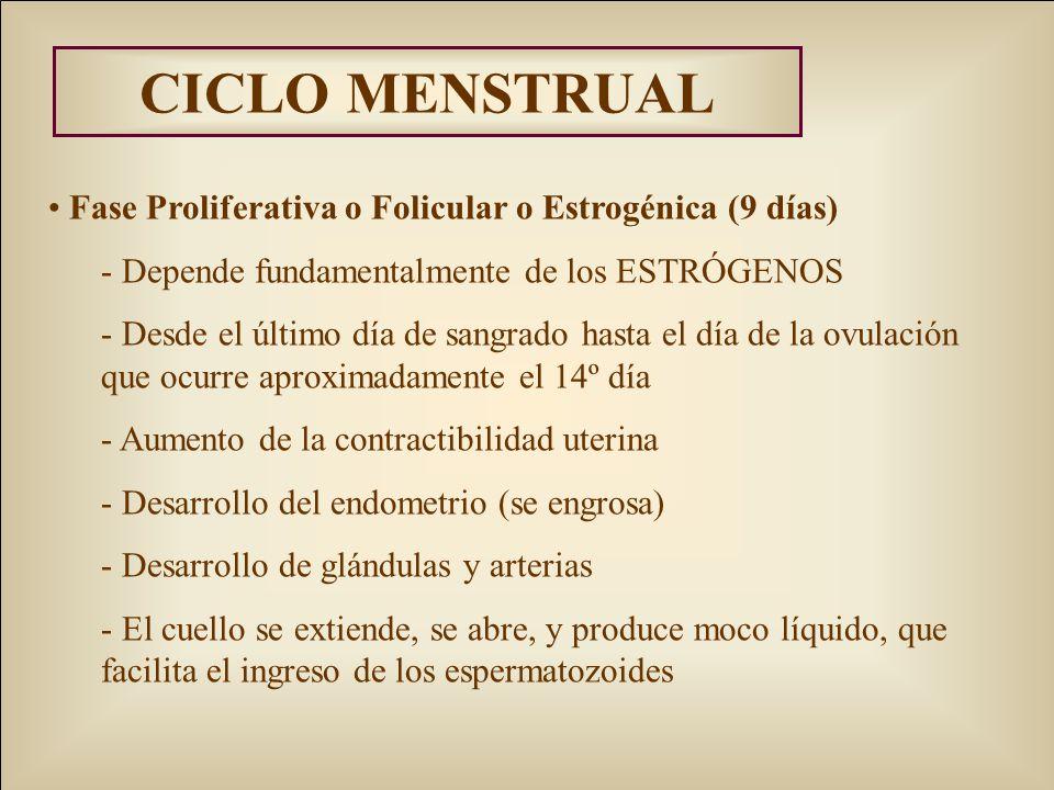 CICLO MENSTRUAL Fase Proliferativa o Folicular o Estrogénica (9 días) - Depende fundamentalmente de los ESTRÓGENOS - Desde el último día de sangrado hasta el día de la ovulación que ocurre aproximadamente el 14º día - Aumento de la contractibilidad uterina - Desarrollo del endometrio (se engrosa) - Desarrollo de glándulas y arterias - El cuello se extiende, se abre, y produce moco líquido, que facilita el ingreso de los espermatozoides