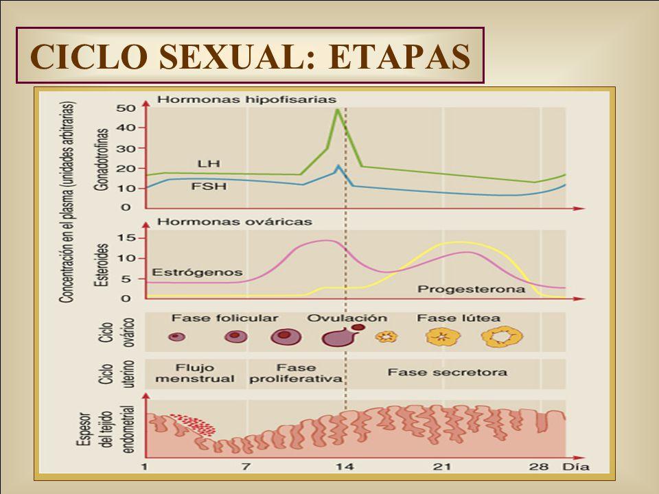 CICLO SEXUAL: ETAPAS