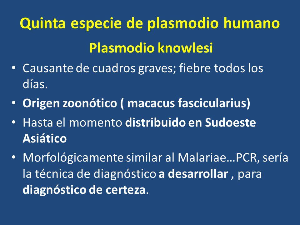 Quinta especie de plasmodio humano Plasmodio knowlesi Causante de cuadros graves; fiebre todos los días. Origen zoonótico ( macacus fascicularius) Has