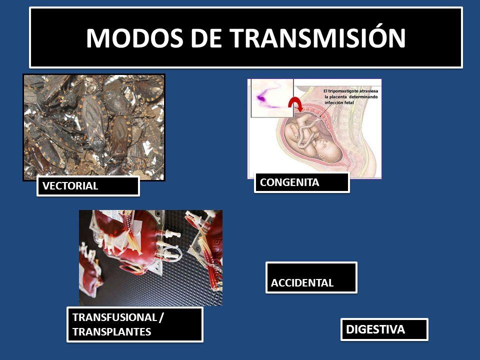 MODOS DE TRANSMISIÓN ACCIDENTALACCIDENTAL TRANSFUSIONAL / TRANSPLANTES CONGENITACONGENITA DIGESTIVA VECTORIALVECTORIAL