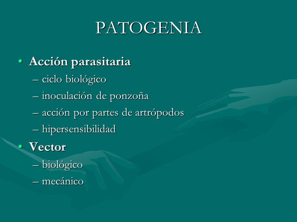 PATOGENIA Acción parasitariaAcción parasitaria –ciclo biológico –inoculación de ponzoña –acción por partes de artrópodos –hipersensibilidad VectorVect