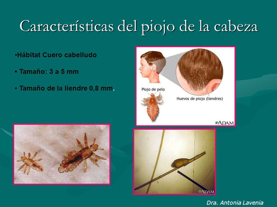 Características del piojo de la cabeza Hábitat Cuero cabelludo Tamaño: 3 a 5 mm Tamaño de la liendre 0,8 mm. Dra. Antonia Lavenia