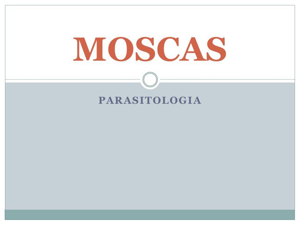PARASITOLOGIA MOSCAS