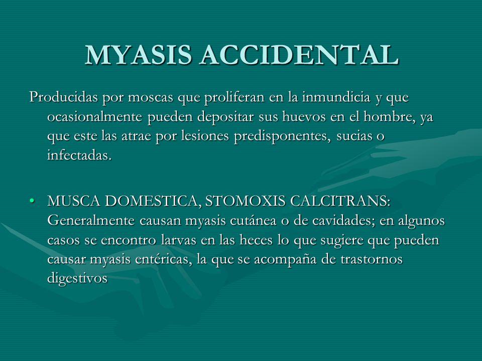MYASIS ACCIDENTAL Producidas por moscas que proliferan en la inmundicia y que ocasionalmente pueden depositar sus huevos en el hombre, ya que este las
