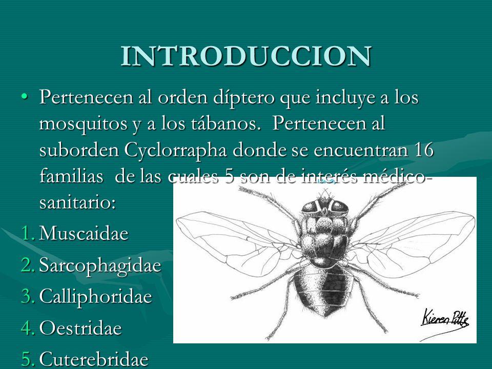 INTRODUCCION Pertenecen al orden díptero que incluye a los mosquitos y a los tábanos. Pertenecen al suborden Cyclorrapha donde se encuentran 16 famili
