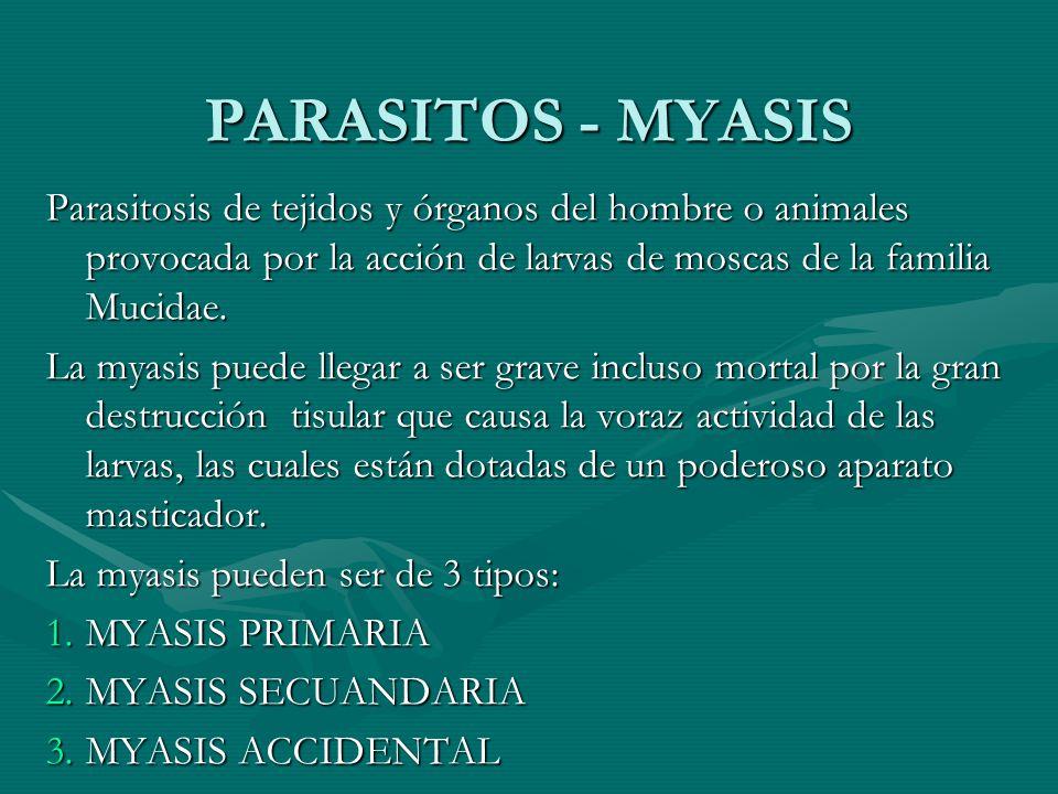 PARASITOS - MYASIS Parasitosis de tejidos y órganos del hombre o animales provocada por la acción de larvas de moscas de la familia Mucidae. La myasis