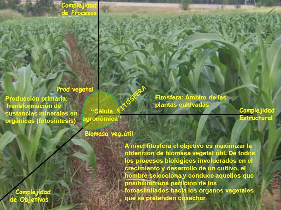 Complejidad Estructural Complejidad de Procesos Complejidad de Objetivos FITOSFERA Prod.vegetal Biomasa veg.útil Fitosfera: Ámbito de las plantas cult