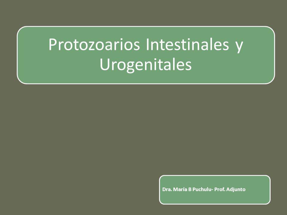 Protozoarios Intestinales y Urogenitales Dra. María B Puchulu- Prof. Adjunto