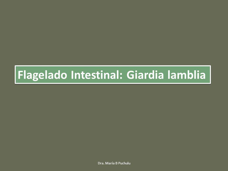 Flagelado Intestinal: Giardia lamblia Dra. María B Puchulu