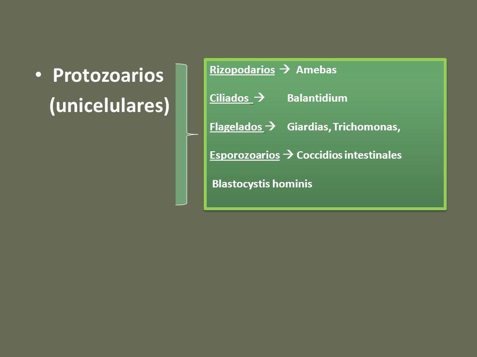 TratamientoTratamiento Reconstituyentes de Flora Intestinal Dra. María B Puchulu