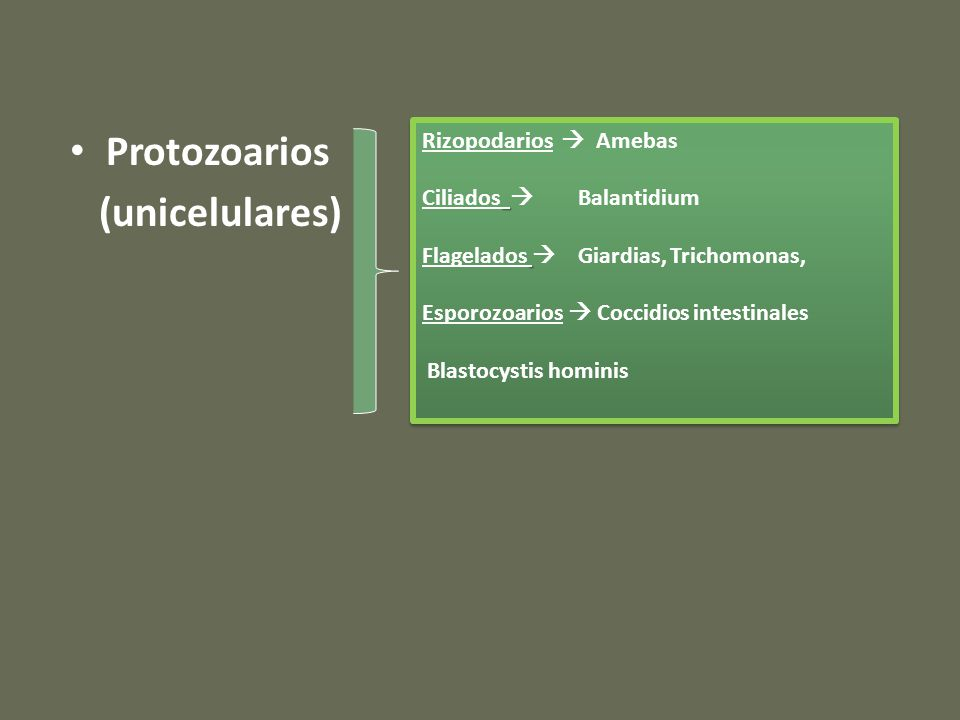 Protozoarios (unicelulares) Rizopodarios Amebas Ciliados Balantidium Flagelados Giardias, Trichomonas, Esporozoarios Coccidios intestinales Blastocystis hominis Rizopodarios Amebas Ciliados Balantidium Flagelados Giardias, Trichomonas, Esporozoarios Coccidios intestinales Blastocystis hominis
