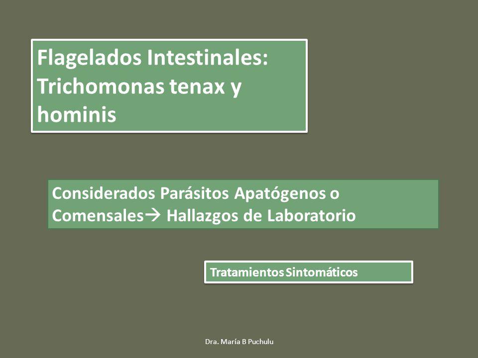 Flagelados Intestinales: Trichomonas tenax y hominis Considerados Parásitos Apatógenos o Comensales Hallazgos de Laboratorio Tratamientos Sintomáticos Dra.