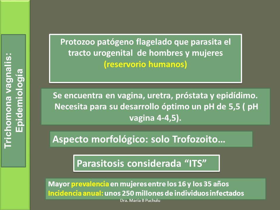 Protozoo patógeno flagelado que parasita el tracto urogenital de hombres y mujeres (reservorio humanos) Trichomona vagnalis: Epidemiología Se encuentra en vagina, uretra, próstata y epidídimo.