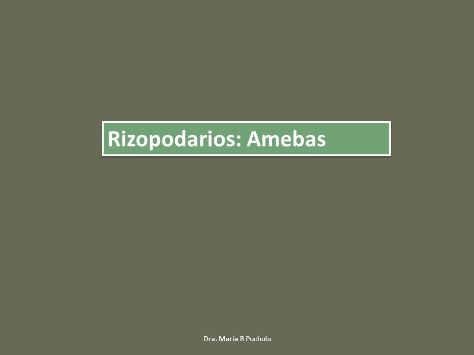 TrofozoitoQuiste Balantidium coli: Morfología Dra.
