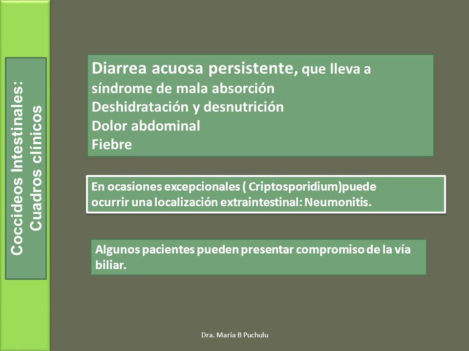 Dra. María B Puchulu Coccideos Intestinales: Cuadros clínicos Diarrea acuosa persistente, que lleva a síndrome de mala absorción Deshidratación y desn