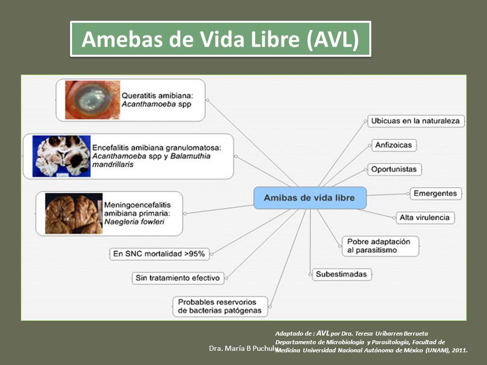 Adaptado de : AVL por Dra. Teresa Uribarren Berrueta Departamento de Microbiología y Parasitología, Facultad de Medicina Universidad Nacional Autónoma