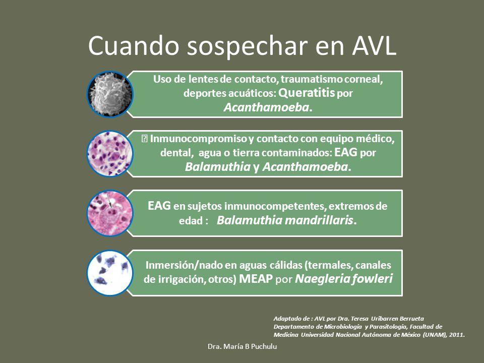 Cuando sospechar en AVL Uso de lentes de contacto, traumatismo corneal, deportes acuáticos: Queratitis por Acanthamoeba. • Inmunocompromiso y contacto