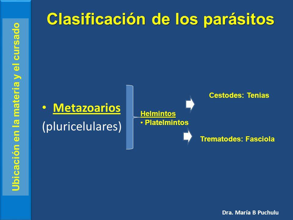 Platelmintos Dra. María B Puchulu