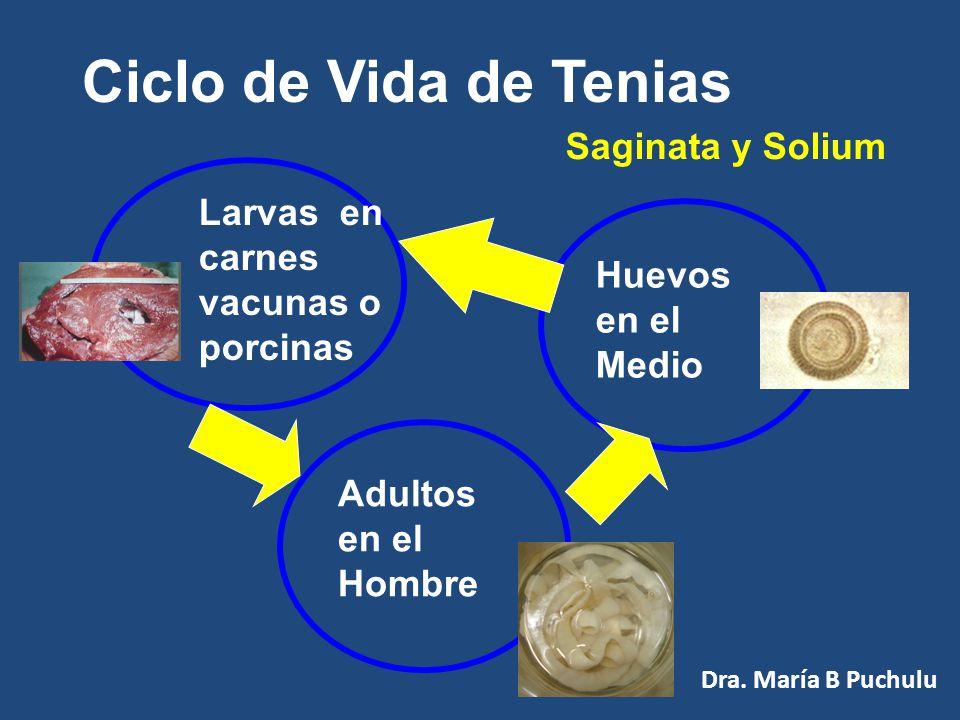 Tenia Solium Dra. María B Puchulu