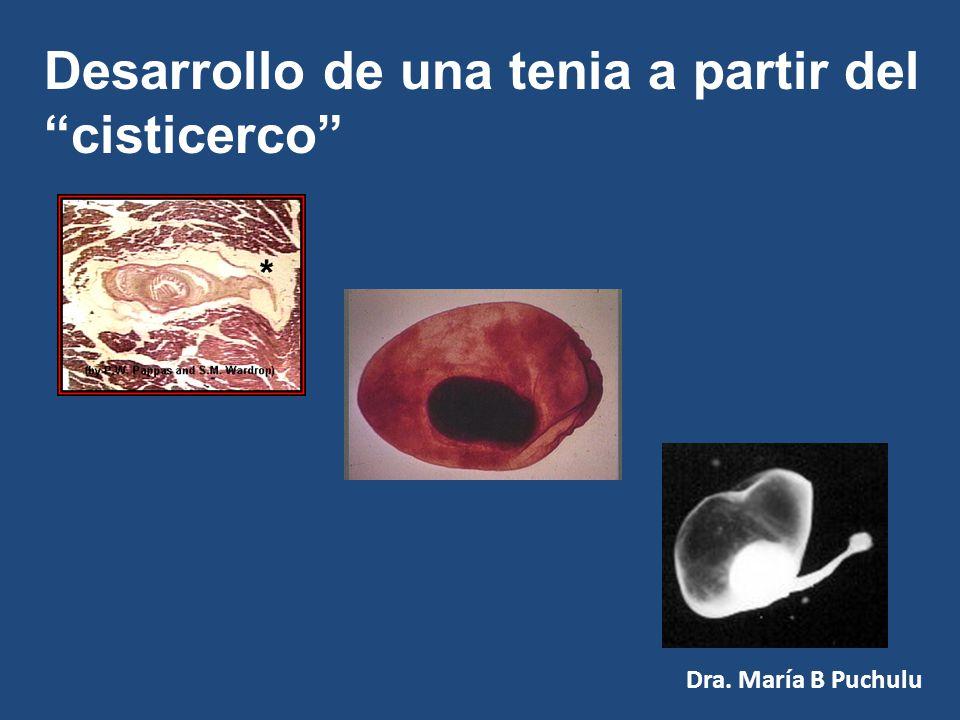Ciclo de Vida de Tenias Larvas en carnes vacunas o porcinas Adultos en el Hombre Huevos en el Medio Saginata y Solium Dra. María B Puchulu