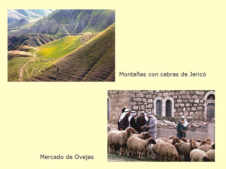 Montañas con cabras de Jericó Mercado de Ovejas