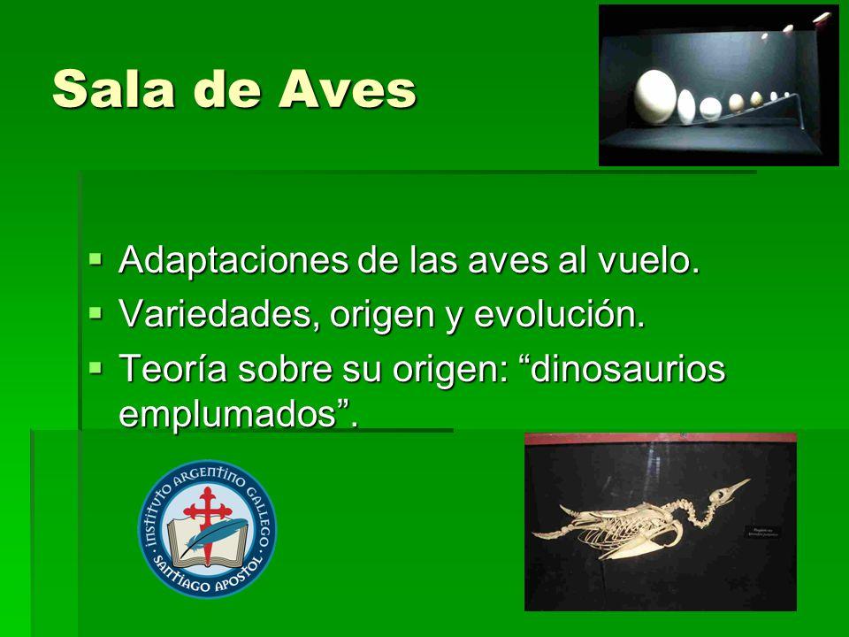 Sala de Aves Adaptaciones de las aves al vuelo. Adaptaciones de las aves al vuelo. Variedades, origen y evolución. Variedades, origen y evolución. Teo