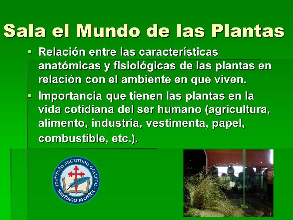 Sala el Mundo de las Plantas Relación entre las características anatómicas y fisiológicas de las plantas en relación con el ambiente en que viven.