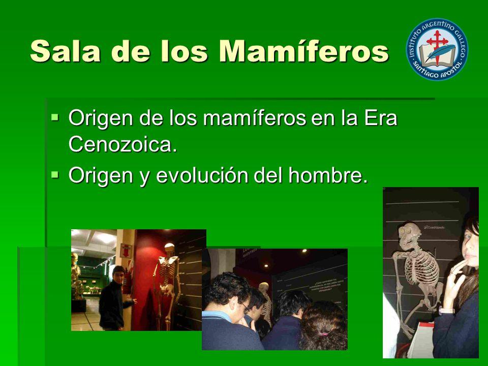 Sala de los Mamíferos Origen de los mamíferos en la Era Cenozoica. Origen de los mamíferos en la Era Cenozoica. Origen y evolución del hombre. Origen