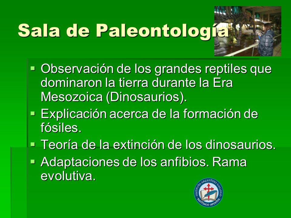 Sala de Paleontología Observación de los grandes reptiles que dominaron la tierra durante la Era Mesozoica (Dinosaurios). Observación de los grandes r