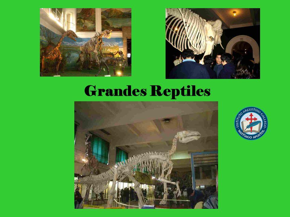 Grandes Reptiles