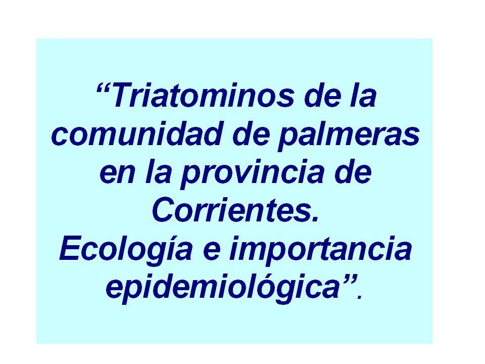 Abundancia relativa mensual de Triatoma sordida según estación climática