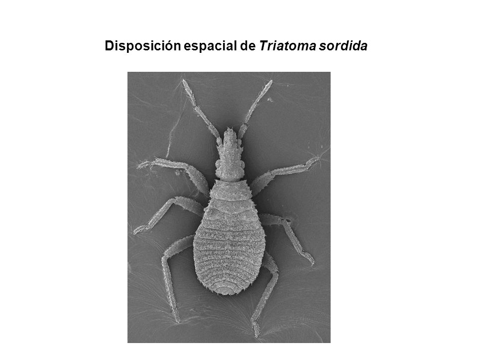 Disposición espacial de Triatoma sordida