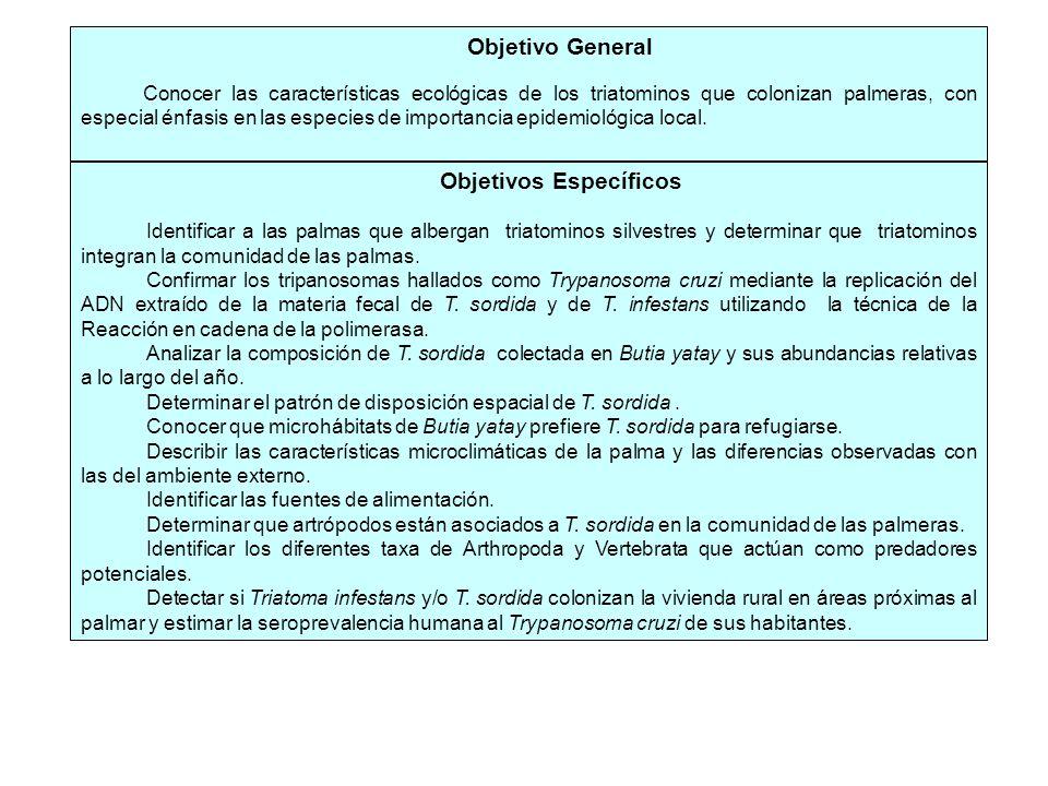 Objetivo General Conocer las características ecológicas de los triatominos que colonizan palmeras, con especial énfasis en las especies de importancia