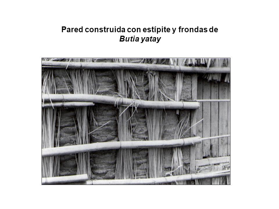 Pared construida con estípite y frondas de Butia yatay