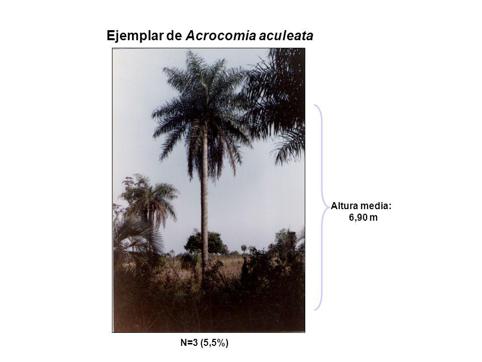 Ejemplar de Acrocomia aculeata N=3 (5,5%) Altura media: 6,90 m