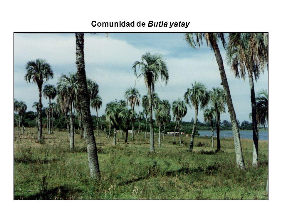 Fauna de Arthropoda discriminada en Clases colectada en Butia yatay