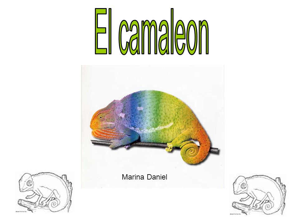 Marina Daniel