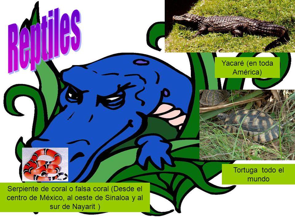 Yacaré (en toda América) Serpiente de coral o falsa coral (Desde el centro de México, al oeste de Sinaloa y al sur de Nayarit ) Tortuga todo el mundo