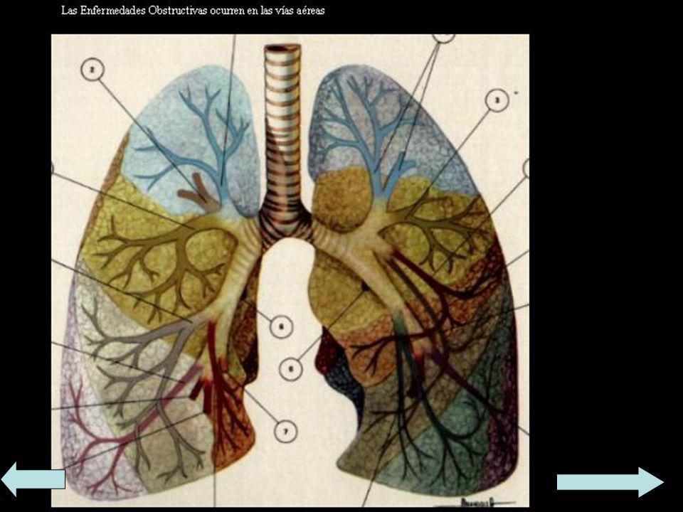 Grupos de enfermedades Según la etiopatogenia las enfermedades se pueden clasificar en: Enfermedad infecciosa. Enfermedad genética. Enfermedad nutrici
