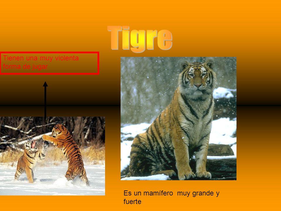 Es también conocido como león americano, león de montaña, cougar, gato rey, catamonte, tigre rojo, gritón de la montaña