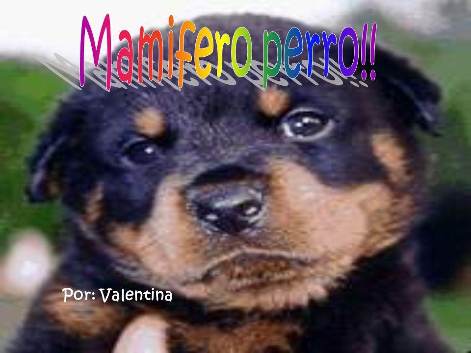 Por: Valentina