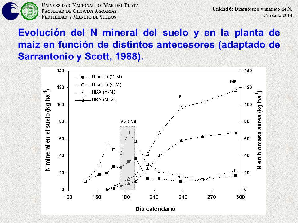 Evolución del N mineral del suelo y en la planta de maíz en función de distintos antecesores (adaptado de Sarrantonio y Scott, 1988). U NIVERSIDAD N A