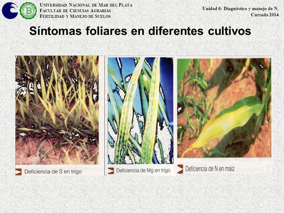 Síntomas foliares en diferentes cultivos U NIVERSIDAD N ACIONAL DE M AR DEL P LATA F ACULTAD DE C IENCIAS A GRARIAS F ERTILIDAD Y M ANEJO DE S UELOS U