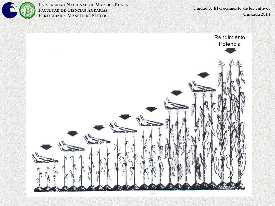 U NIVERSIDAD N ACIONAL DE M AR DEL P LATA F ACULTAD DE C IENCIAS A GRARIAS F ERTILIDAD Y M ANEJO DE S UELOS Factores de producción o de crecimiento CLIMA: Precipitación (cantidad y distribución), Temperatura, Radiación, Fotoperíodo, Termoperíodo CLIMA: Precipitación (cantidad y distribución), Temperatura, Radiación, Fotoperíodo, Termoperíodo CULTIVO: Cultivar, Fecha y Densidad de Siembra, Arquitectura, Manejo, Malezas, Plagas, Sanidad CULTIVO: Cultivar, Fecha y Densidad de Siembra, Arquitectura, Manejo, Malezas, Plagas, Sanidad SUELO: Profundidad, Textura, Materia Orgánica, CIC, pH, Saturación con Bases, Estructura, Porosidad, Compactación, Temperatura.