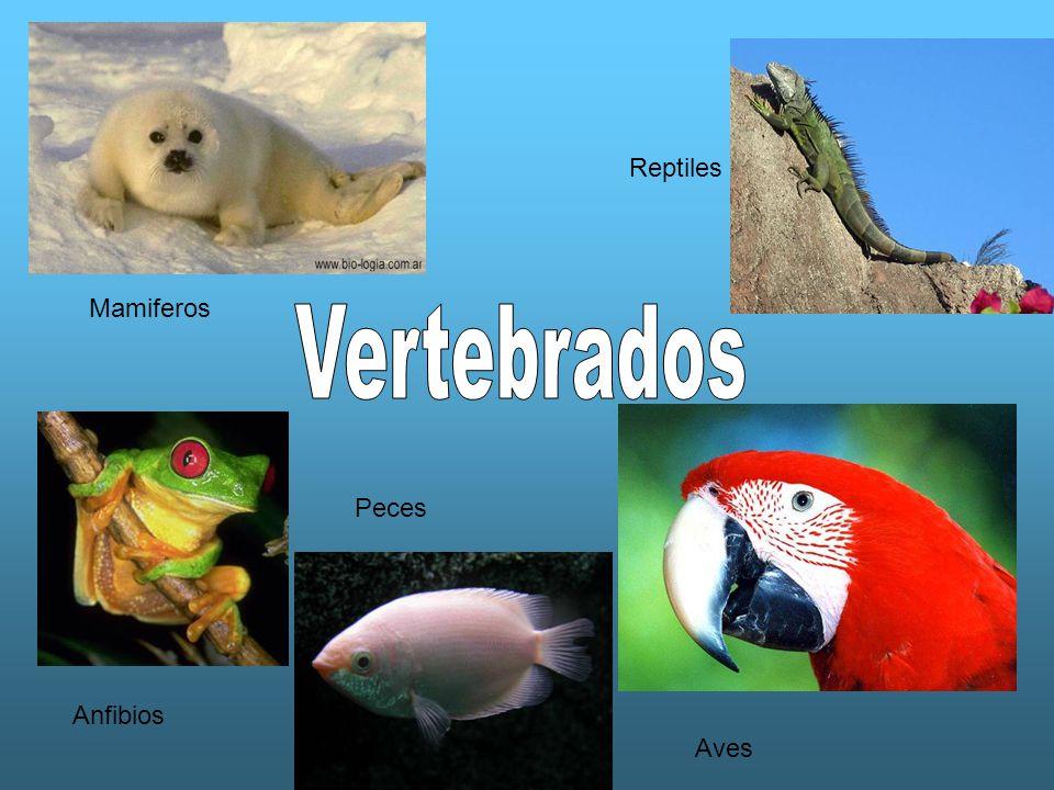 Aves Peces Anfibios Mamiferos Reptiles