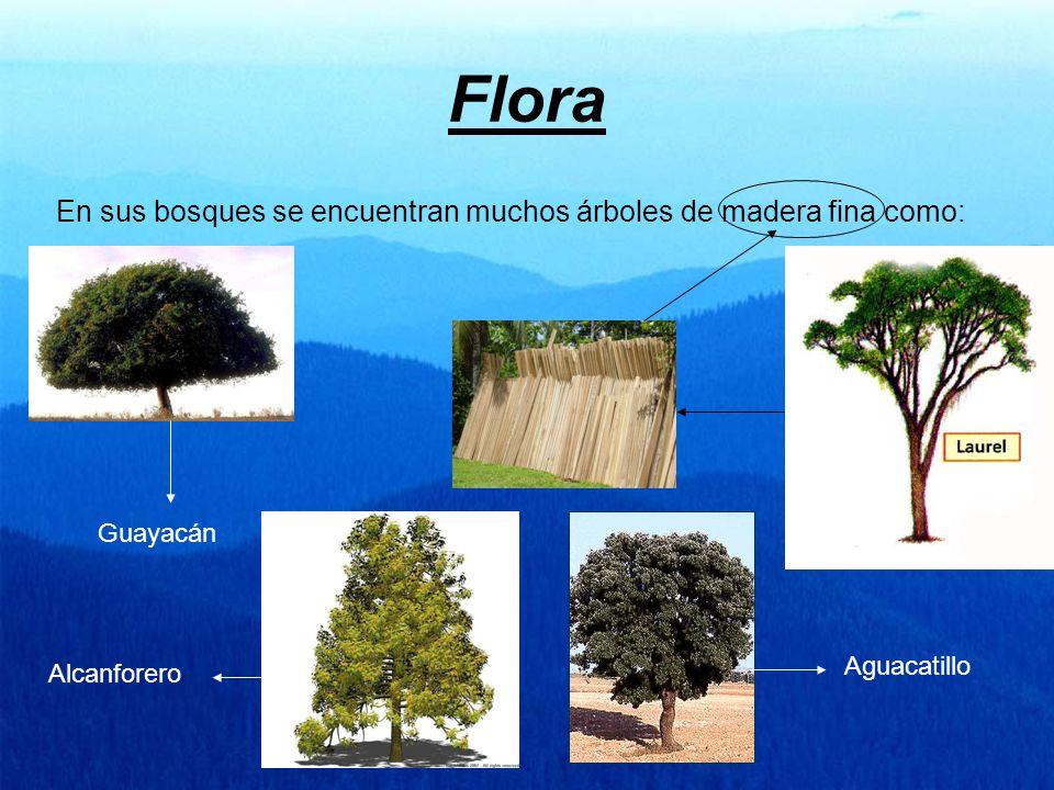 Flora En sus bosques se encuentran muchos árboles de madera fina como: Guayacán Alcanforero Aguacatillo
