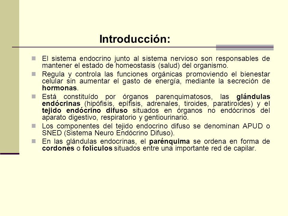 Introducción: El sistema endocrino junto al sistema nervioso son responsables de mantener el estado de homeostasis (salud) del organismo. Regula y con