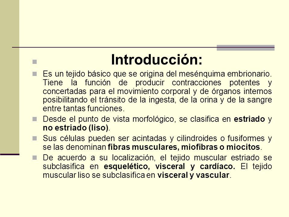 Introducción: Es un tejido básico que se origina del mesénquima embrionario. Tiene la función de producir contracciones potentes y concertadas para el