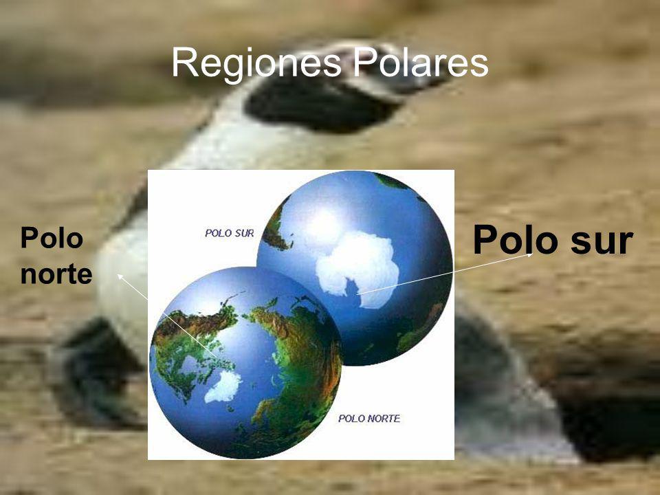 Polo sur-Antártida Continente dentro del Círculo Polar Austral, rodeado de océanos.